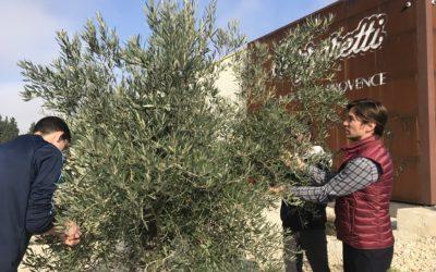 Le temps des olivades à Biovence
